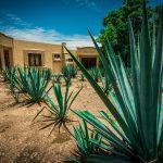 Meksykańska maseczka przeciwtrądzikowa z nektaru agawy. DIY