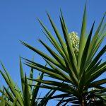 5 roślin, które Indianie stosowali zamiast mydła
